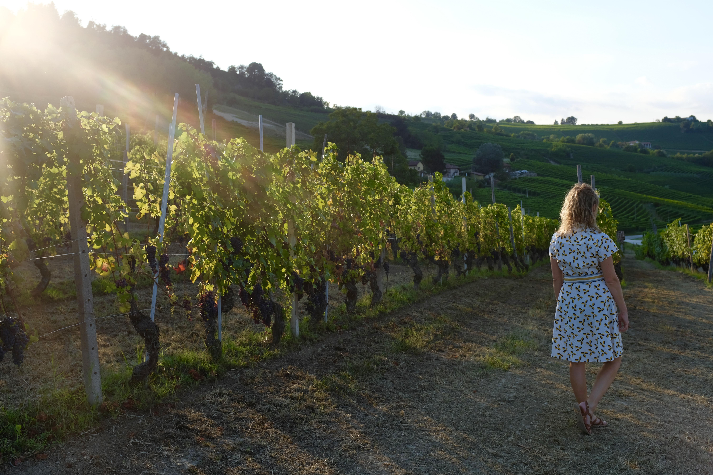 Weinberge Piemont La Morra